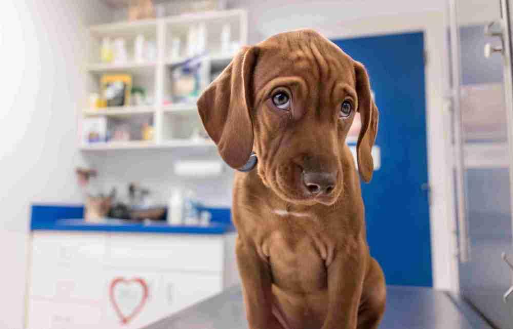 medium resolution of portrait of dog in vets office
