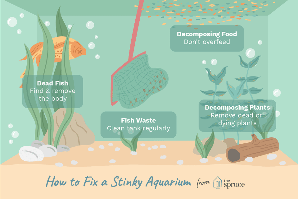 How To Get Fish Smell Out Of Car Carpet - Carpet Vidalondon