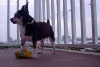 10 Dog-Friendly Ideas for Balconies