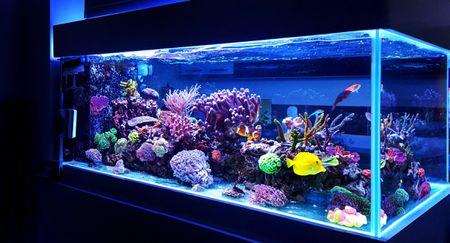 vacation aquarium care