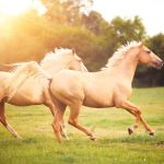 The Most Popular Horse Breeds And Types Of Horses