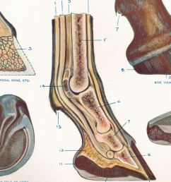 diagram of heel structure [ 5047 x 2839 Pixel ]