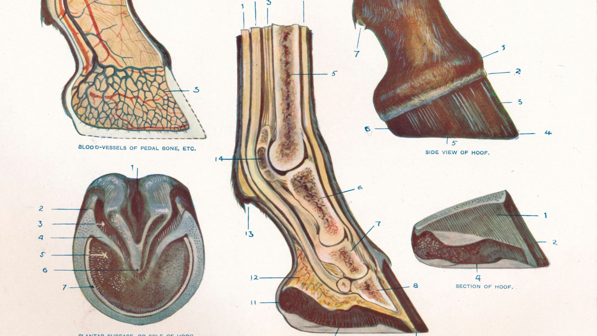 hight resolution of diagram of heel structure