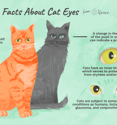 illustration of facts about cat eyes [ 1500 x 1000 Pixel ]