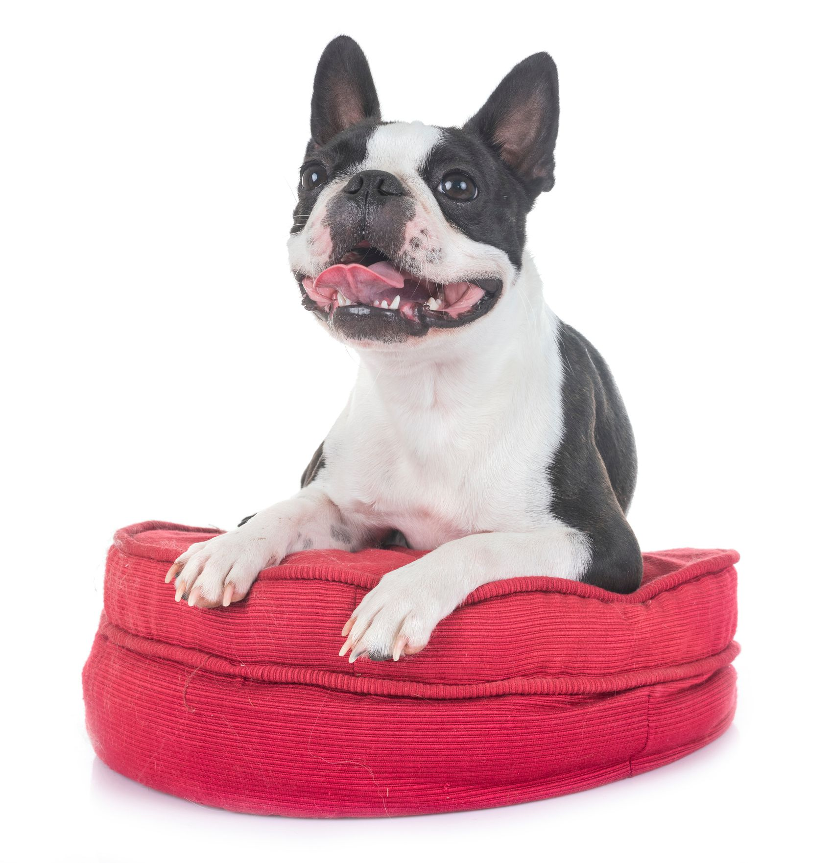 the 8 best orthopedic dog beds to buy in 2019