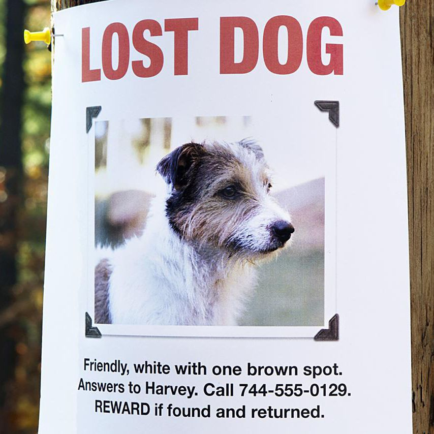 how to find a lost or missing puppy