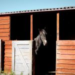 Advantages And Disadvantages Of Horse Stables And Sheds