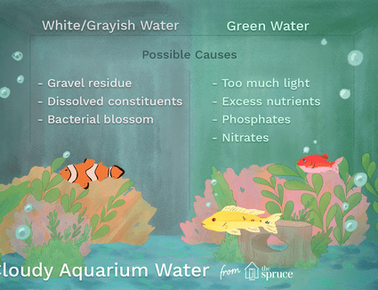 Identify and Treat the Causes of Smelly Aquarium Water