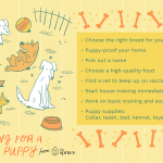 Puppies 101 How To Take Care Of A Puppy