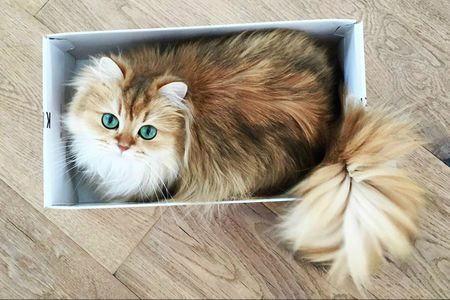 the 25 cutest cats