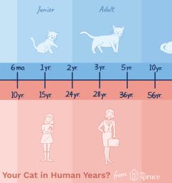 dog size diagram [ 1500 x 1000 Pixel ]