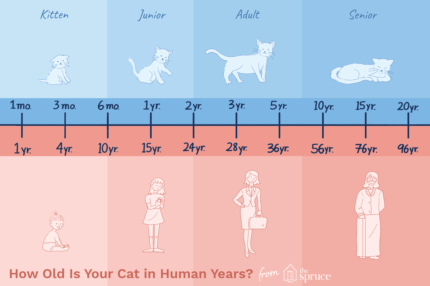hight resolution of dog size diagram
