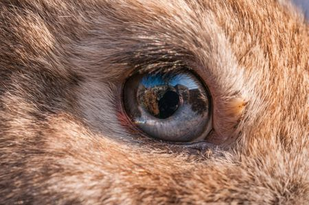 canine eye diagram right 8 bit magnitude comparator logic what to do if your rabbit has problems close up