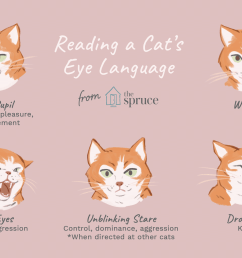dog and cat eye diagram [ 1333 x 1000 Pixel ]