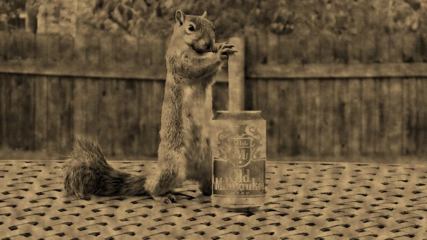 Not even squirrels can resist the taste of Old Milwaukee