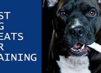 Best dog treat for training