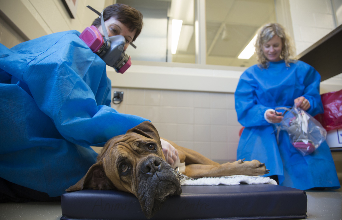 The medical truths about cats and dogs  Toronto Star
