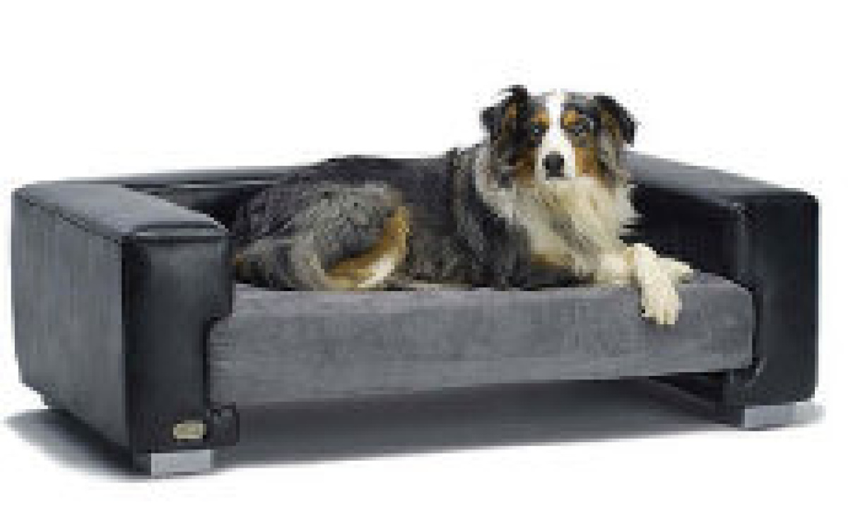 These Beds Have Gone To The Dogs The Star