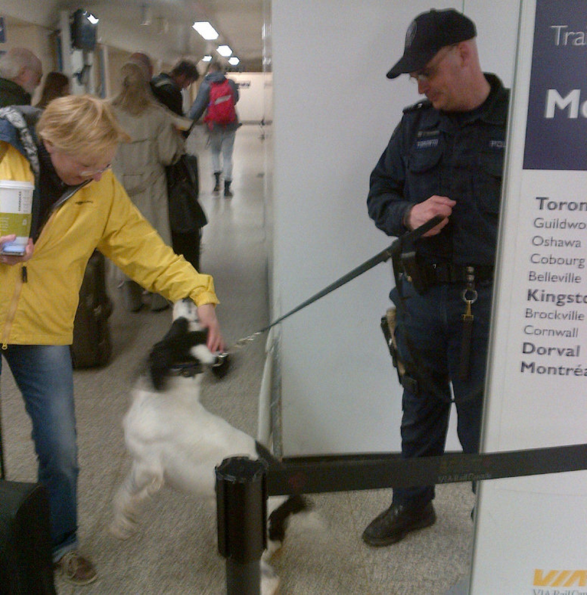 Personal Security Dogs