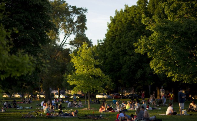 Man Dies After Branch Falls On Him In Trinity Bellwoods
