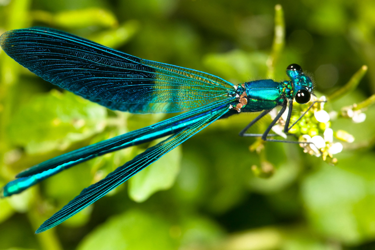 Star Short Story Contest Winner A Dragonfly Dashed
