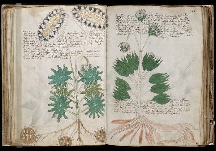 Pages from the Voynich manuscript showing plants.