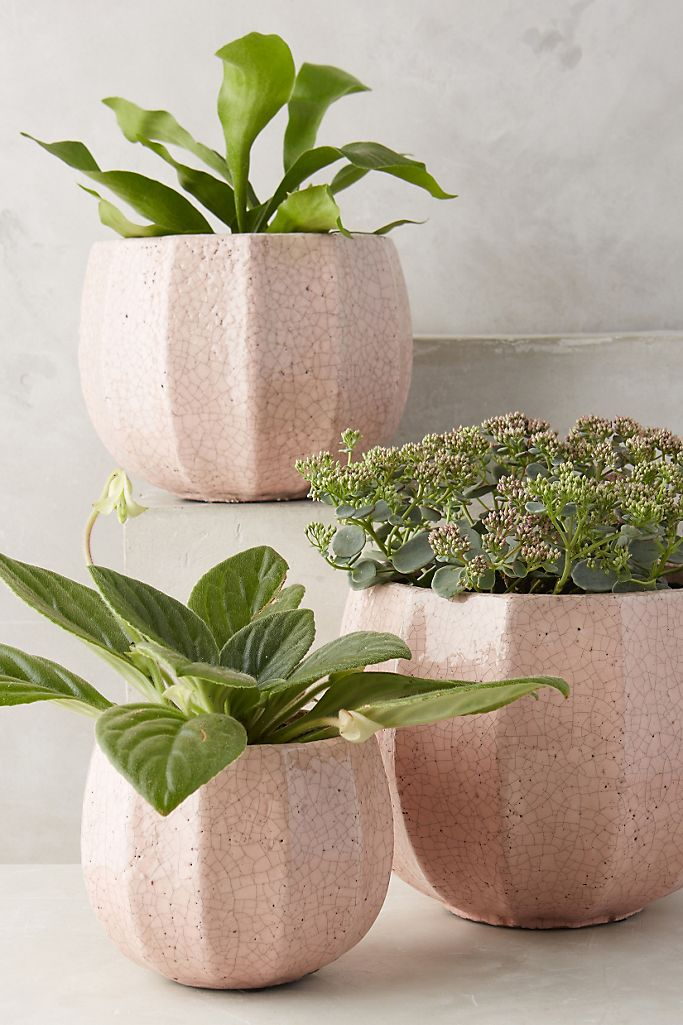 These Ridged Terracotta Pots are perfect for your succulents