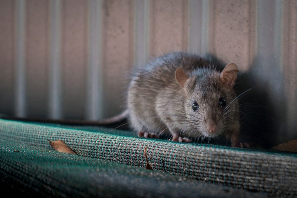 China man dies from hantavirus; all you need to know about the ...