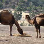 STD Testing Partnership – Happy Hump Day Podcasts
