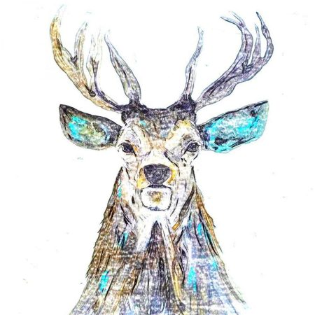 Colourful Stag Sketch Card Julie Steel The Steel Rooms