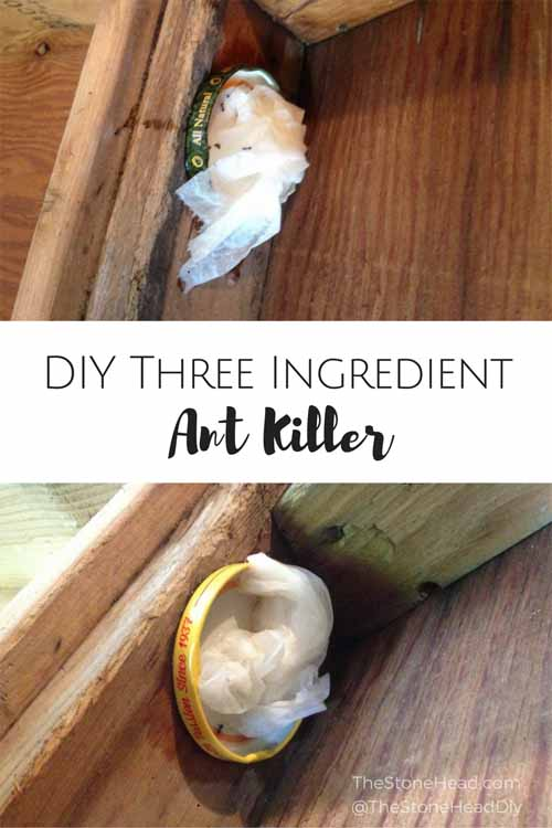 DIY Ant Killer