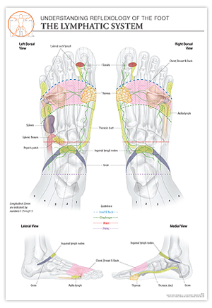 reflexology foot diagram reflex zones bromine phase sketch chart: lymphatic system - the stone institute, llc