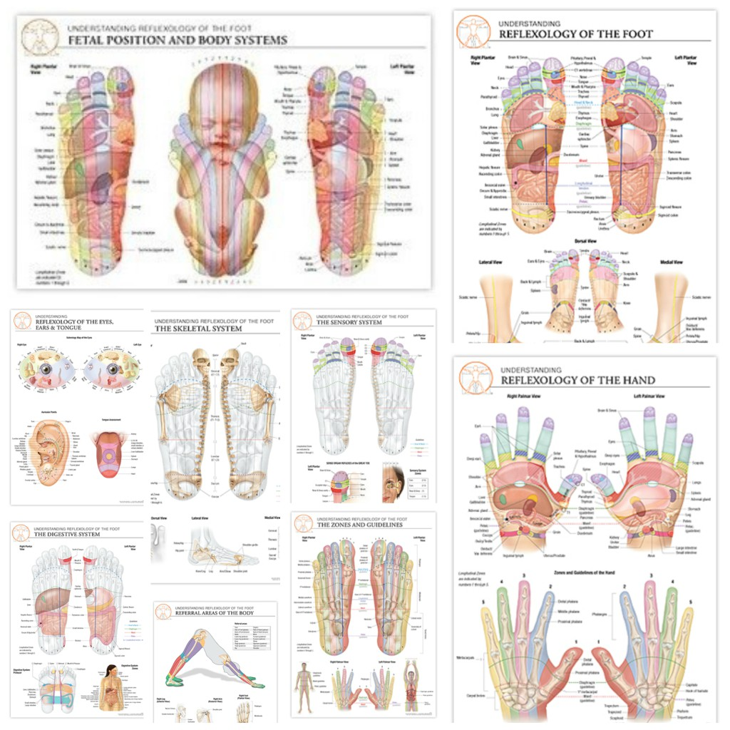 reflexology foot diagram reflex zones msd 6al wiring ford mustang chart bundle set of all 17 charts the stone