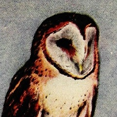 Painting of Stone Owl