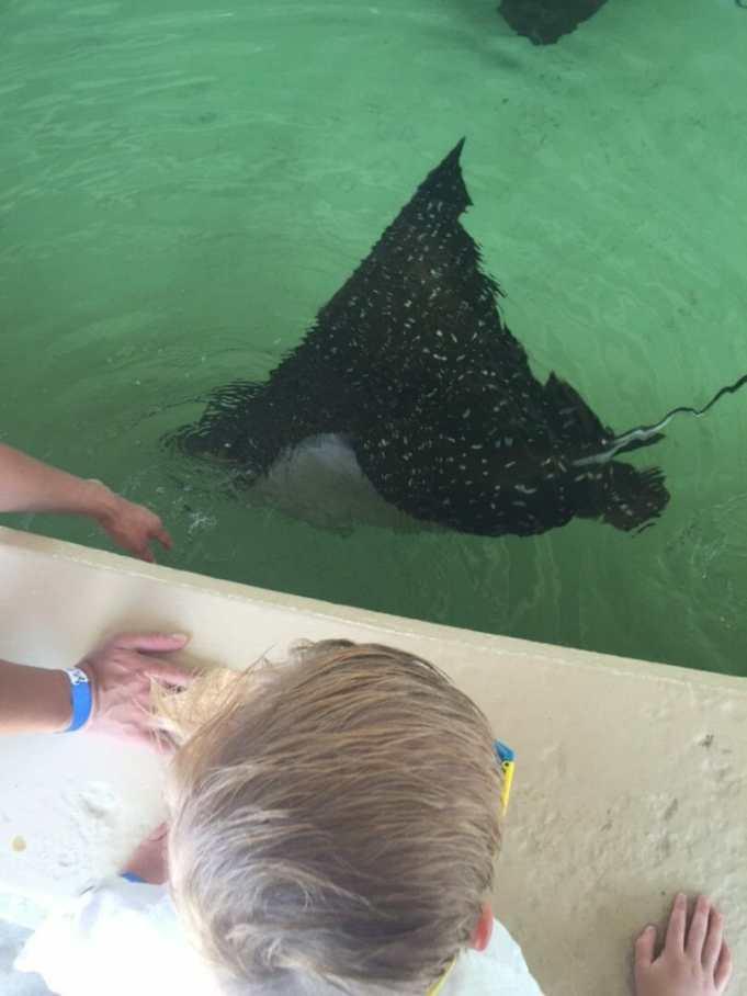 seaworld  sting ray