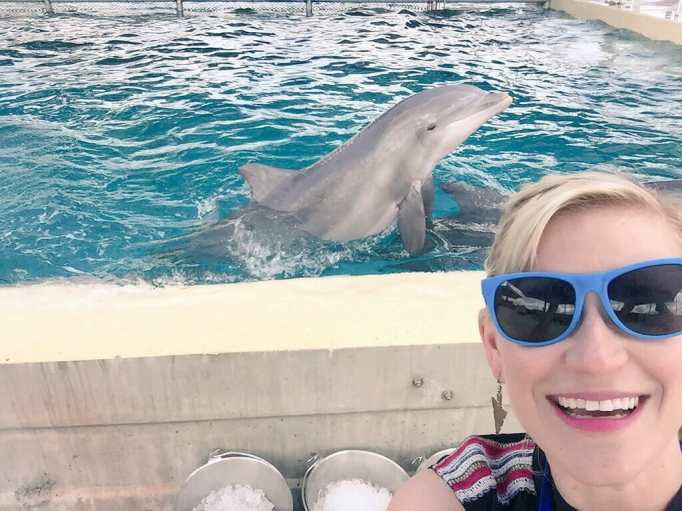 seaworld dolphins