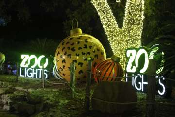 san antonio zoo lights