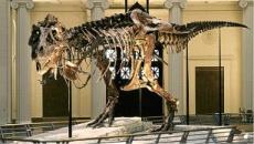 Dinosour 1