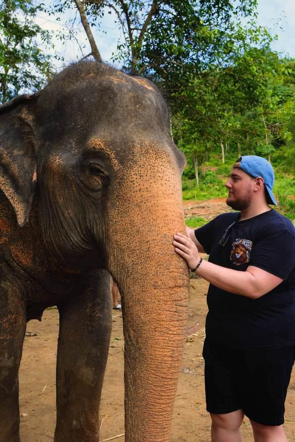 elephant-phuket-max