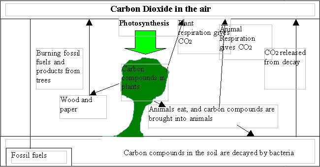 the carbon cycle diagram gcse vr6 ecu wiring revision biology and nitrogen cycles student image jpg