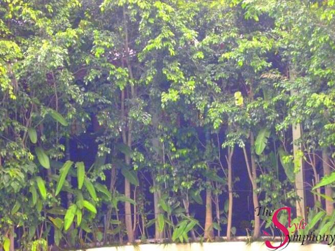 Leonia resort jungle