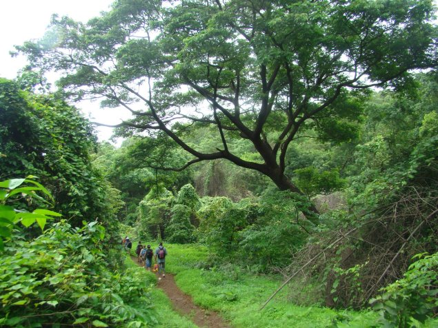 Sanjay Gandhi National Park View