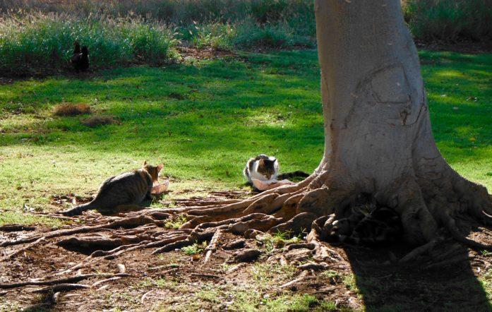 The Cat Hole at Maui Nui Golf Course