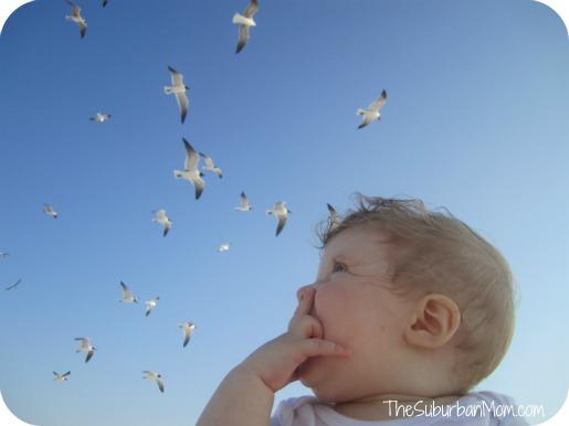 feeding-birds-2