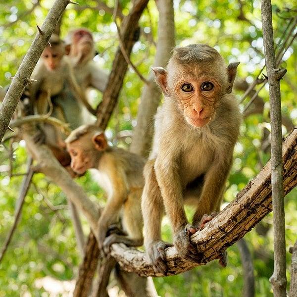 Dianeynature Monkey Kingdom