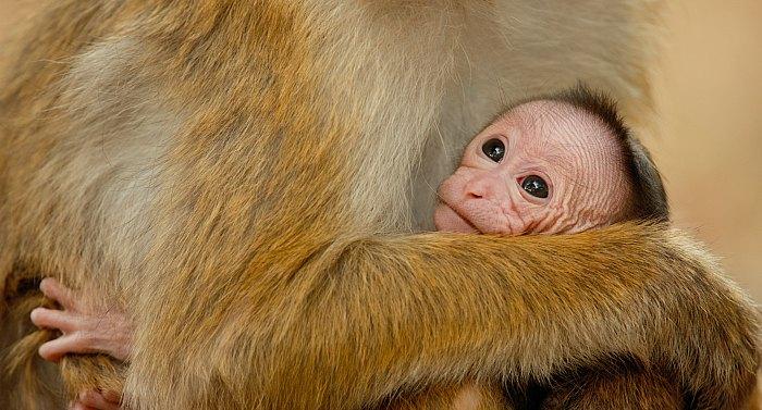 Monkey Kingdom Baby
