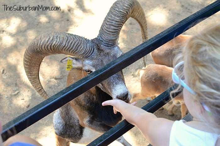 Feeding Animals Lazy 5 Ranch
