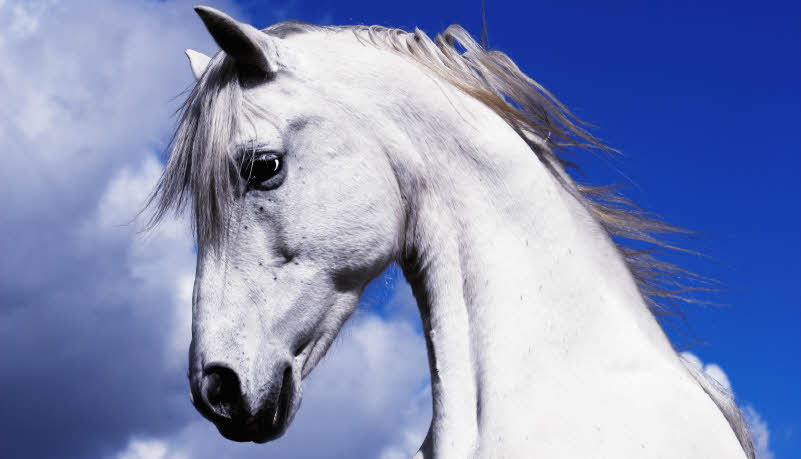 Conscious Evolution – Lessons From a Horse