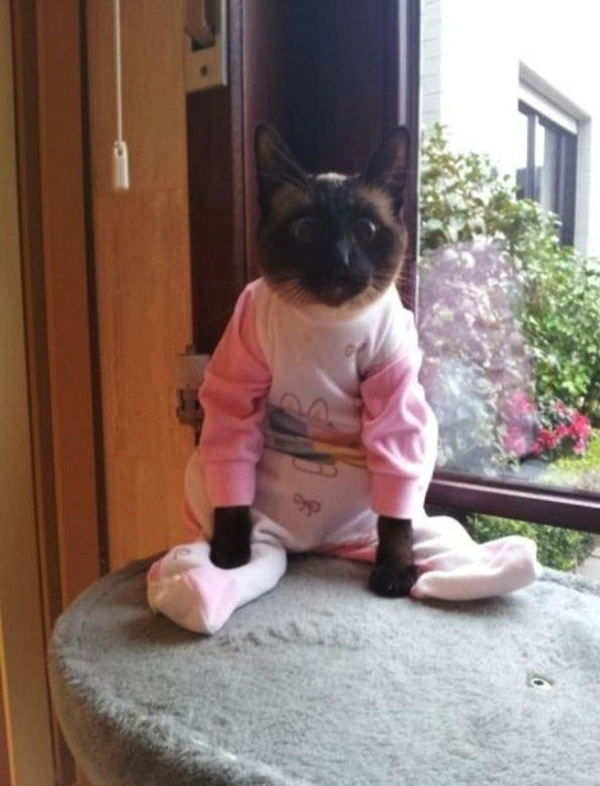 cats in pyjamas and