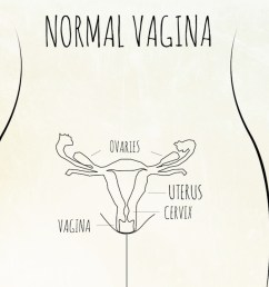 in contrast this is a diagram of a normal fully formed female reproductive [ 1280 x 720 Pixel ]